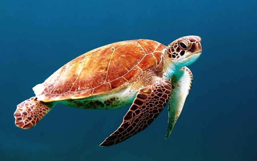 Nutrição em tartarugas